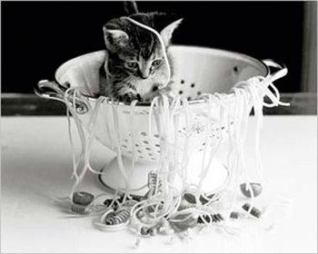 Kitten - with spaghetti Plakát