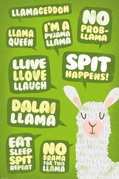 Llama - Quotes Plakát