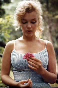 Marilyn Monroe - Flower Plakát