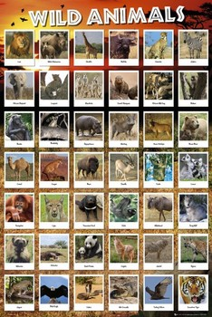 Plakát Animals