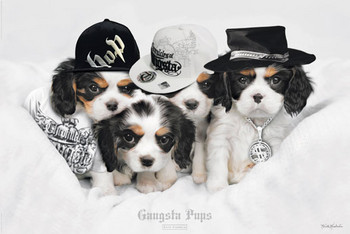 Plakát  Keith Kimberlin - gangsta pups