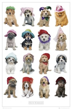 Plakát Keith Kimberlin - klobouky