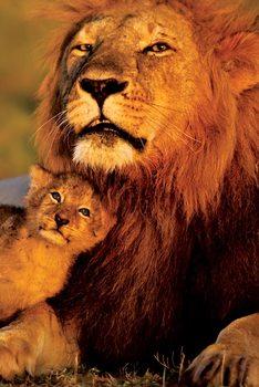 Plakat Lew - Lion and cub