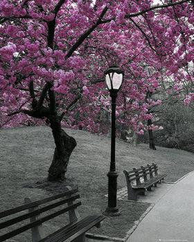 Plakát New York - Pink Blossom