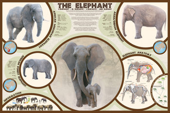 Plakat The elephant