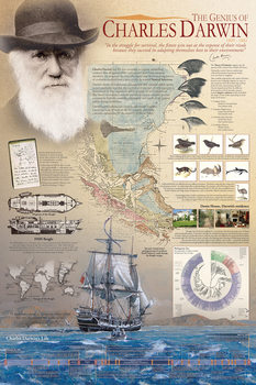 Plakat The genius of Charles Darwin