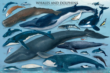Plakat  Whales and doplhins