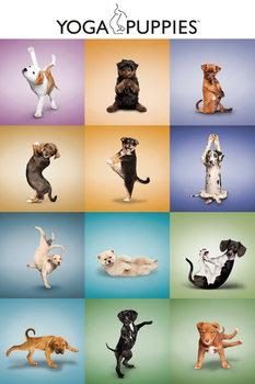 Plakat Yoga - Szczenięta