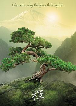 Plakat Zen drzewo