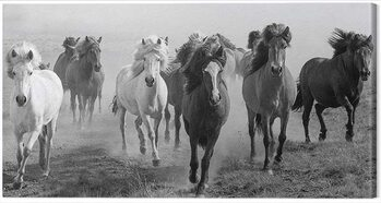 Slika na platnu Carys Jones - Dusty Plains