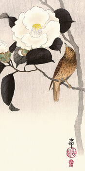 Ohara Koson - Songbird and Flowering Camellia Slika na platnu