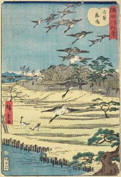 Obraz na płótnie Homing Geese at Shirahige, November 1861