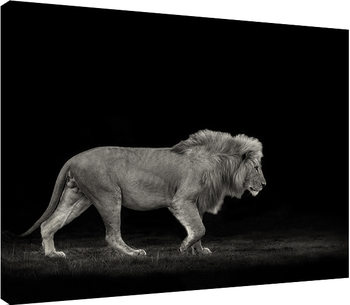Obraz na płótnie Mario Moreno - Majestic