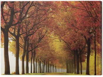 Lars Van De Goor - So Full Obraz na płótnie