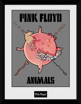 Pink Floyd - Animals Inramad poster