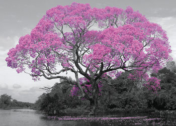 Poster Albero - Blossom