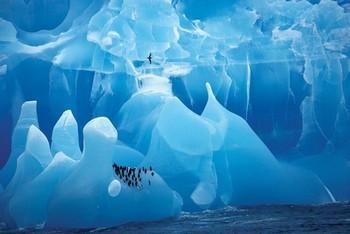 Poster Arctic wonderland – penquins