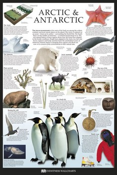 Poster Artic & Antarctic