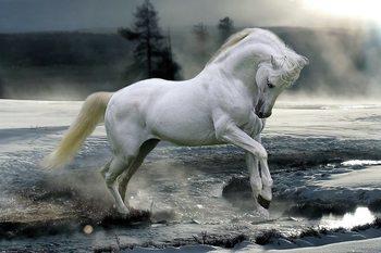 Póster  Bob Langrish - Horse Snow