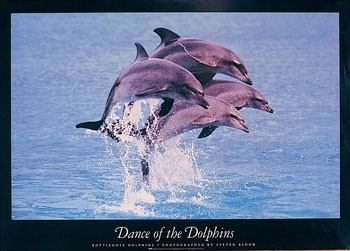 Poster Dance of the dolphins