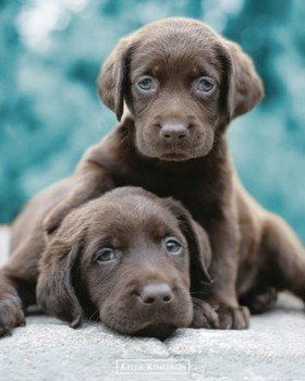 Poster Keith Kimberlin - choc labs