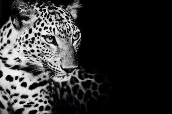 Luipaard - Kings of Nature Poster