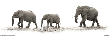 Poster  Mario Moreno - The Elephants