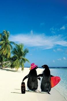 Poster Penquin paradise
