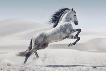 Poster Pferd - Andaluz