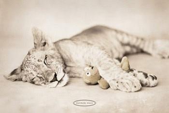 Póster Rachael Hale - arjuna & teddy