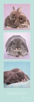 Póster Rachael Hale - bunny bliss