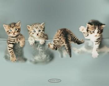 Póster RACHAEL HALE - kittens