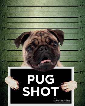 Rachael Hale - Pug Shot Banjo Poster