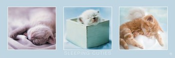 Rachael Hale - sleeping cuties Poster