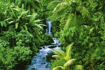 Poster Rainforest