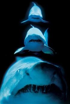 Poster Shark atack - shark