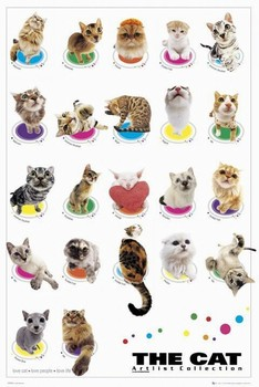 Poster The cat - compilation
