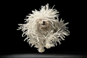 Póster Tim Flach - flying mop