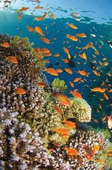 Poster Tropical waterworld
