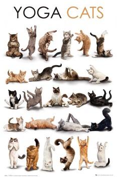 Yoga cats poster, Immagini, Foto