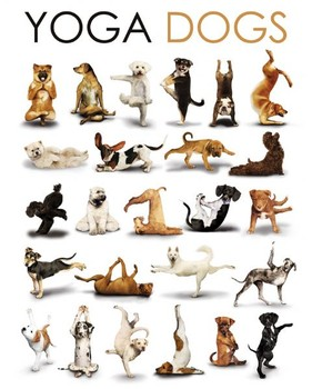 Yoga dogs - compilation Poster