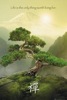Zen poster, Immagini, Foto