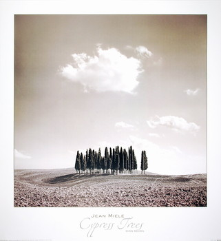 Cypress Trees Reproducere