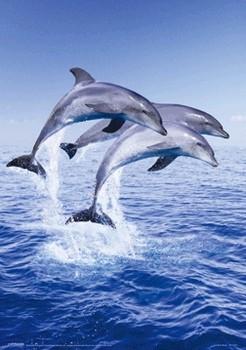 Dolphin trio Poster 3D