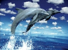 Dolphins leap Poster 3D