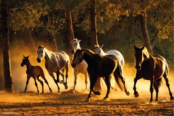 Poster Horses Andaluces