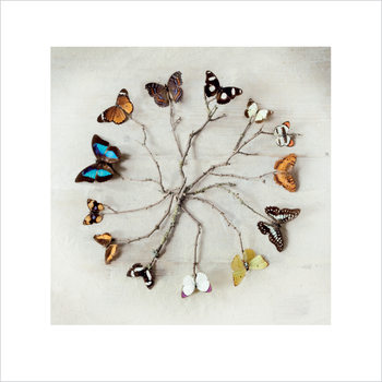 Ian Winstanley - Butterfly Harmony Reproducere