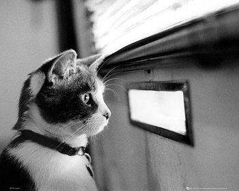 Kitten - Letterbox Poster