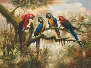 MACAW MORNING Reproducere