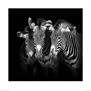 Marina Cano - Shades of Grevy Reproducere